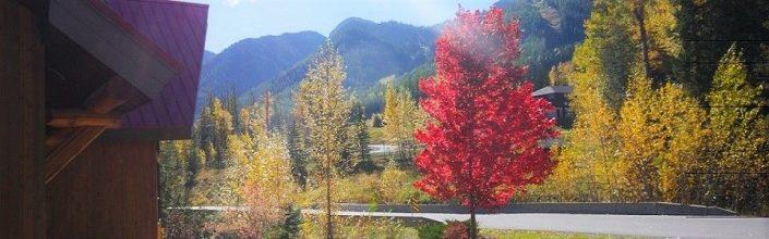 Fernie Fall Foliage